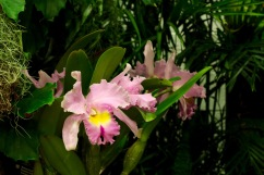 orchid19 - 24