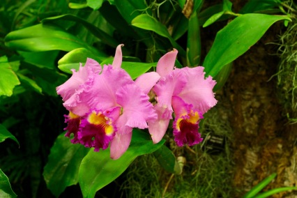 orchid19 - 25