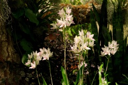 orchid19 - 38