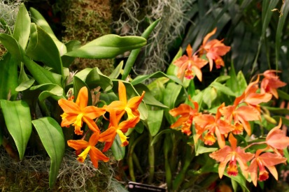 orchid19 - 4