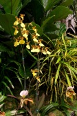 orchid19 - 6