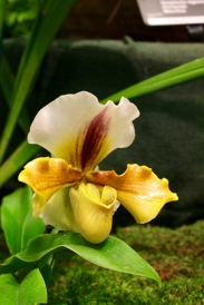 orchid19 - 7