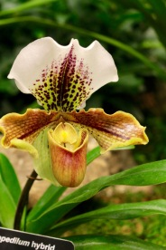 orchid19 - 8