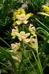 orchid19 - 9