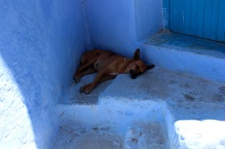 I wished I were this dog, in a shady spot.