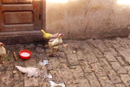In the cloth-dying district, the chickens have been dyed.