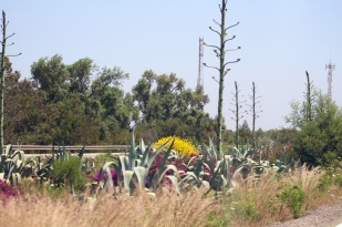 Turning north to Tangier, cactus instead of flowering shrubs.