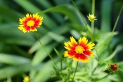 garden-june - 5