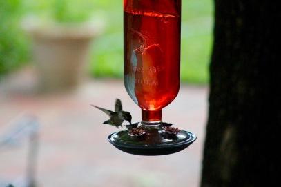 hummingbird19 - 3