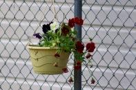 in-the-garden-19Oct - 11