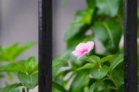 in-the-garden-19Oct - 2