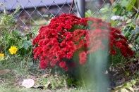 in-the-garden-19Oct - 4