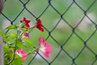 in-the-garden-19Oct - 8